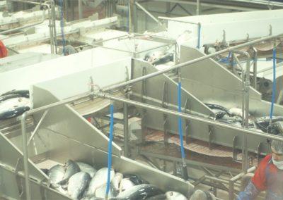 Laksefabrik